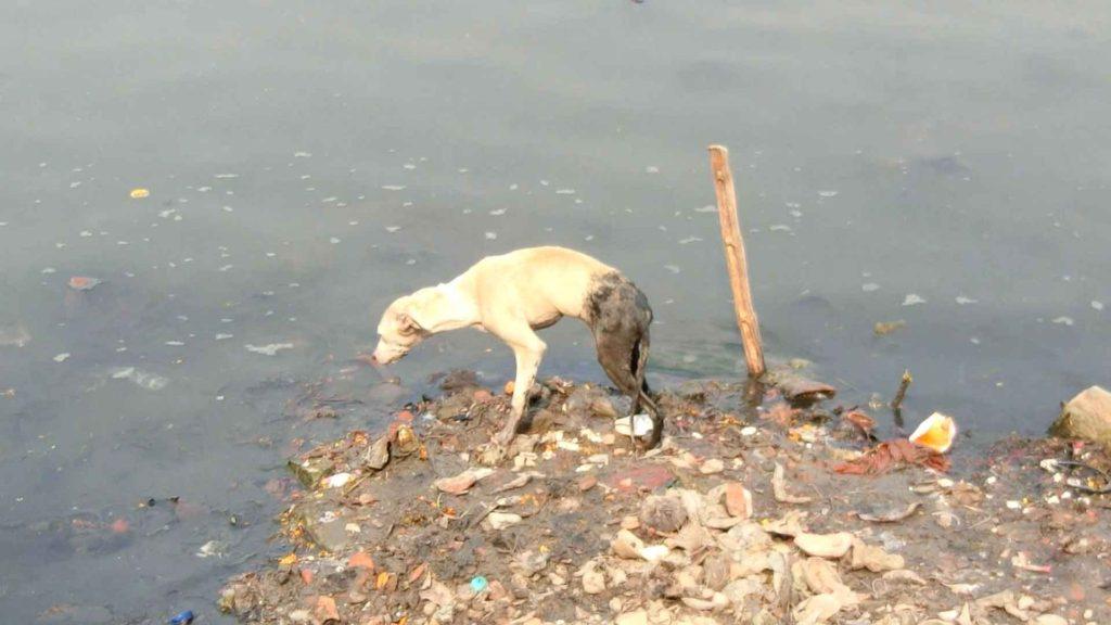 ガンジス川と犬